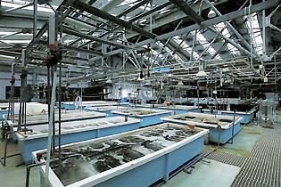 長崎県総合水産試験場 種苗量産技術開発センター