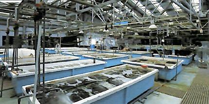 水槽 水産試験場